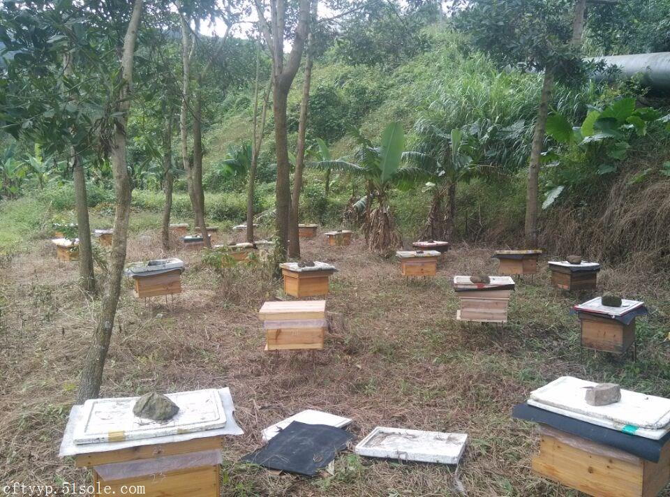供应纯天然土蜂蜜冬季蜜糖枇杷蜜农家自养蜂蜜