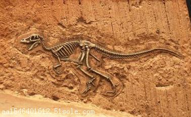 化石,古代生物的遗体,遗物或遗迹埋藏在地下变成的跟石头一样的