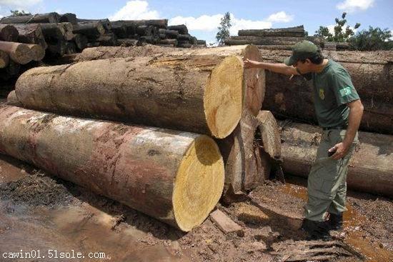 广州进口木材|家具CITES濒危证办理