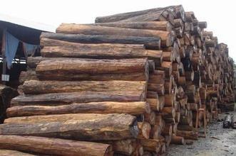 进口越南木材赣州清关一个柜大概要多少钱
