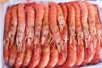 天津进口加拿大北极虾进口流程