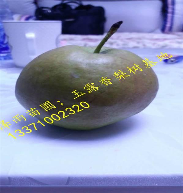 喜水梨树苗喜水亩产量多少