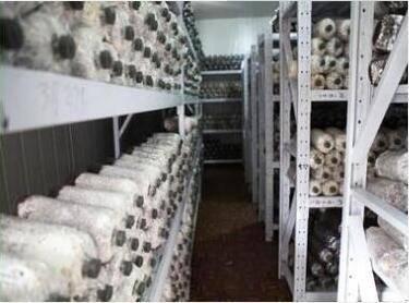菌菇生长温湿度环境控制系统 食用菌工厂化