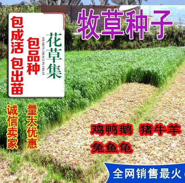 桂圆种子价格