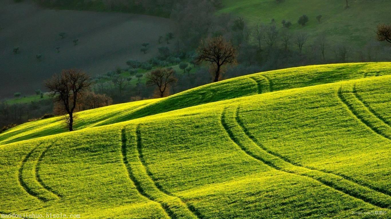 壁纸 成片种植 风景 植物 种植基地 桌面 1366_768