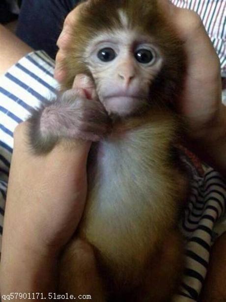 抚顺的宠物哪里有猴子卖