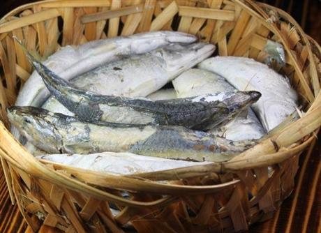 冷冻海鲜进口报关的常见问题