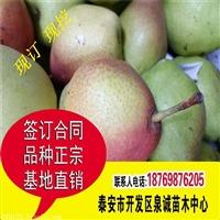 梨树苗种植技术