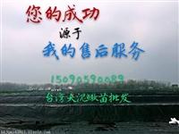 江苏泥鳅苗价格 乾发泥鳅养殖技术 批发泥鳅苗