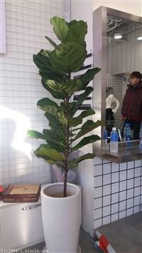 北京专业花卉绿植租赁服务公司