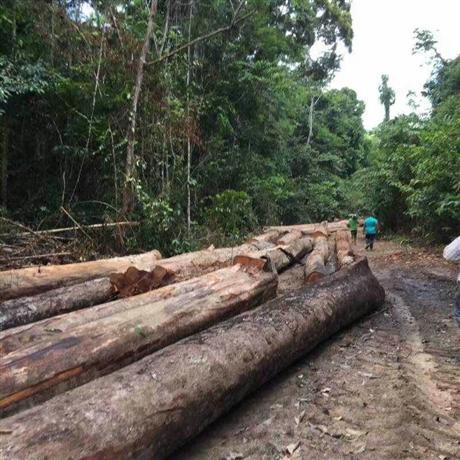 天津港非洲原木板材代理进口公司