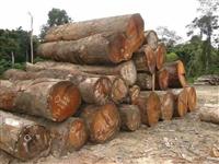 非洲原木板材进口需要哪些资料