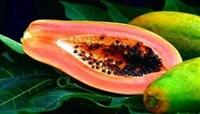 泰国番木瓜进口清关|新鲜水果进口报关
