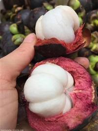 泰国山竹进口清关|新鲜水果进口报关