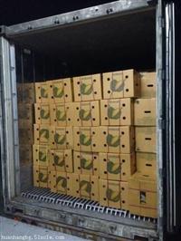 泰国榴莲进口清关|新鲜水果进口报关