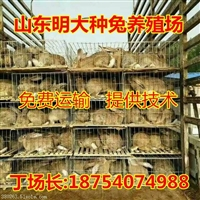 獭兔哪里的便宜台州肉兔市场价格