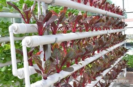 智能温室大棚环境系统在无土栽培上的应用