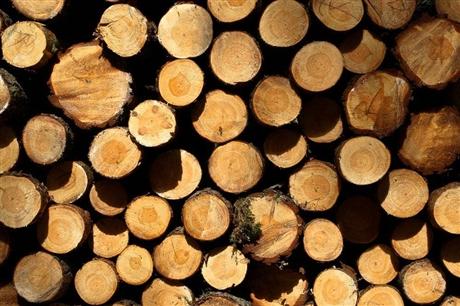 2018年进口南美玉檀香木材到中山报关关税多少