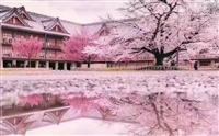 办日本签证看樱花