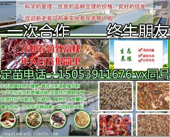 汉中青红虾苗具体价格汉中百科养殖
