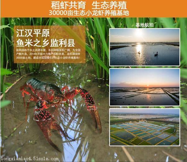徐州种虾怎样养殖龙虾养殖技术提供