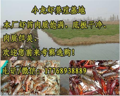 荆门小龙虾种苗周围哪里有虾苗卖定位客户