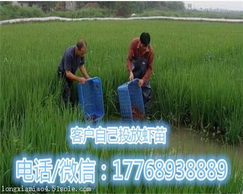 西安种虾苗出售价格定位客户
