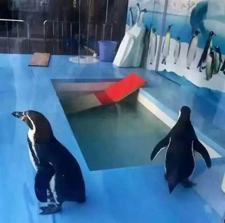 专业的海洋动物展览海狮表演企鹅展租赁企鹅海狮表演