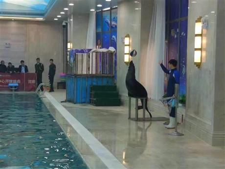 海洋生物展览出租租赁企鹅海狮表演出租