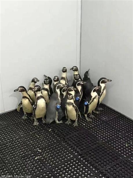 海洋生物展水母鱼缸展出租海洋展主题布置企鹅海狮表演租赁