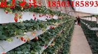 草莓立体种植槽  草莓槽