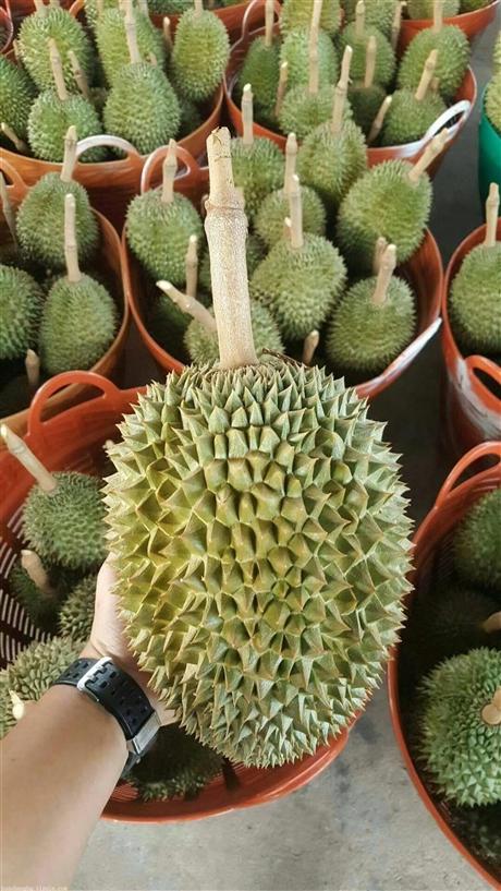 进口泰国榴莲需要什么资料和单证