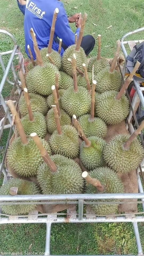 进口马来西亚榴莲需不需要备案如何办理备案流程
