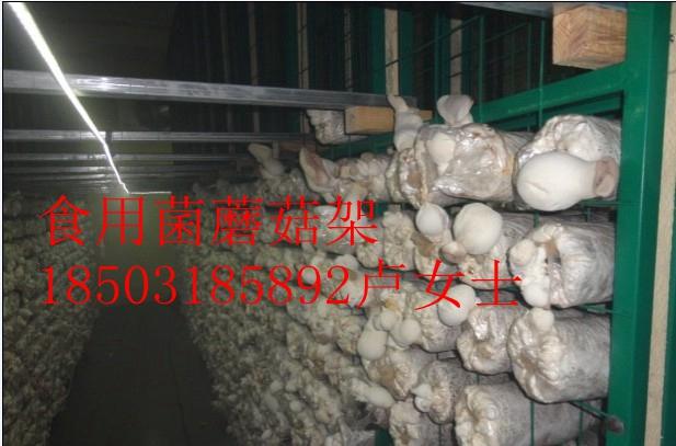 温室种植-温室食用菌蘑菇种植-温室种植技