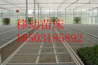 苗床集结号-价格低到让你疯狂打CALL-厂家直销-安平华耀农业设施