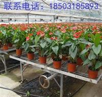 青州市花卉移动苗床  花卉苗床规格有哪些