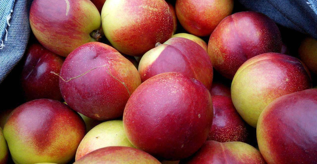 澳洲油桃进口办理手续进口清关