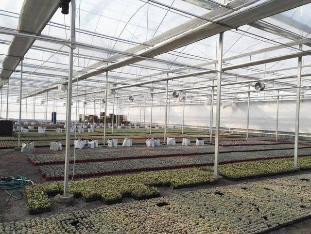专业温室大棚建造-温室建造-2018报价-超值回馈