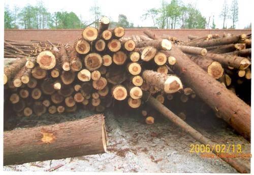 巴拿马木材进口报关公司