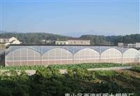 浙江嘉兴火龙果热带水果大棚温室连体薄膜、10米开跨型建造公司