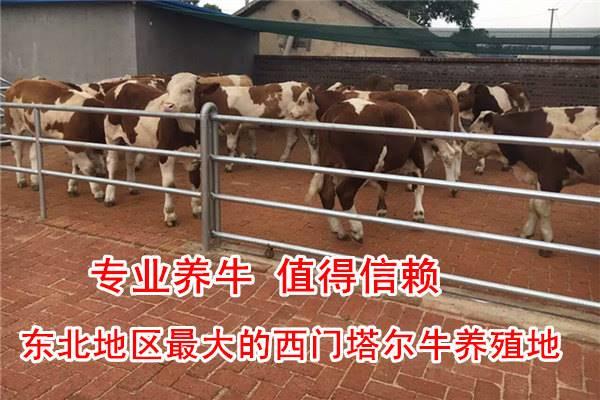 加盟牛苗价格