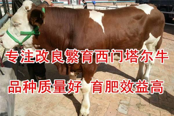 好用的牛多少钱一头