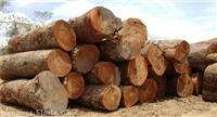 有公司征集酸枝木主要征集什么酸枝木呀