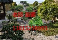 苏州庭院花园绿化施工、别墅庭院景观绿化设计,景观施工庭院绿化