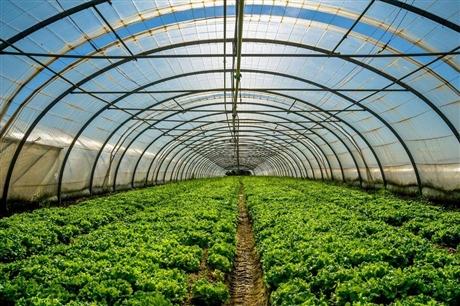 山东温室大棚智能控制系统化,为温室管理提供全套解决方案,星奥