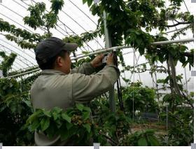 四川智能温室大棚远程无线监控系统,为温室管理提供全套解决方案