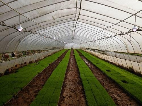 辽宁物联网温室大棚智能农业管理平台,远程控制,手机APP,
