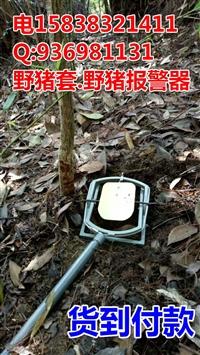 野猪套报警器 高压宝应县-师宗县野猪吊脚套的制作视频