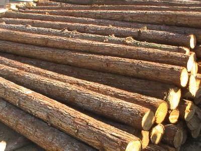 进口木材一般贸易操作流程详细介绍