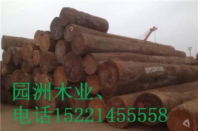 山樟木厂家告诉你山樟木有几个产地